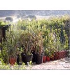 Custodia Mobili - Flowers, deposito piante -
